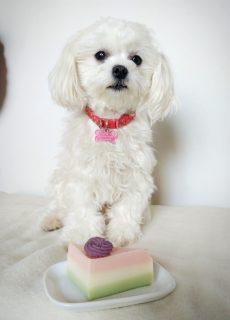 500円割引クーポン犬のケーキ