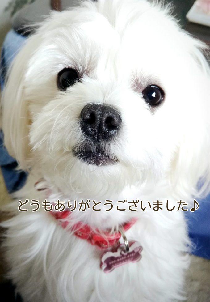 犬のケーキプレゼント