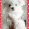 めざせ☆2代目看板犬&試食係候補の小梅です☆