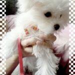 犬の道具箱:北関東に大きな地震が….ペットのためにしておかなきゃ