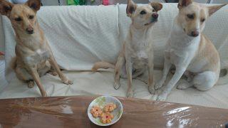 第7回犬のミニケーキプレゼントどうもありがとうございましたー!