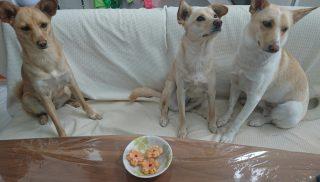 第7回犬用ケーキプレゼント